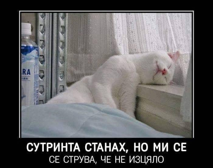 Котка спи смешно