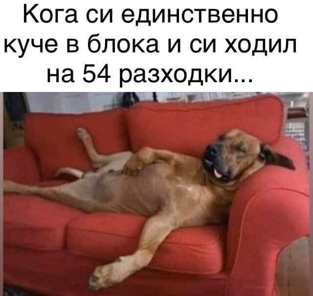 Смешна снимка на спящо куче